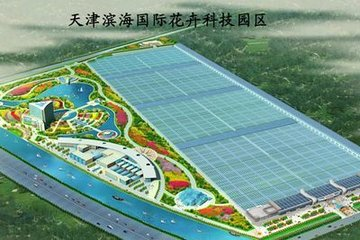 大顺国际花卉股份有限公司 照片