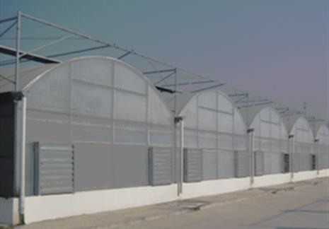 薄膜连栋温室(沧州温室) 照片