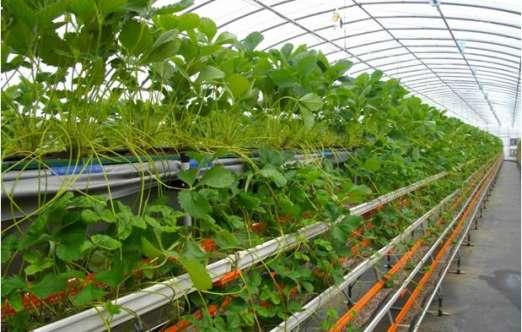 草莓高架分层育苗栽培设备(北京华农) 照片