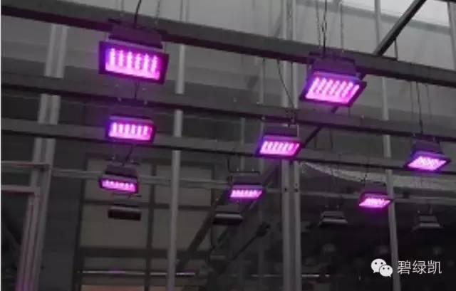 LED植物生长灯 (北京华农) 照片