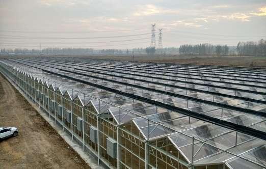 F-clean膜温室(青岛蓝天) 照片